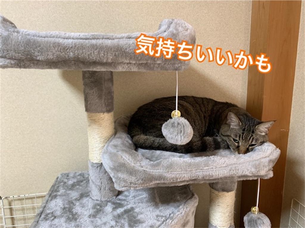 新しいキャットタワーに乗る猫