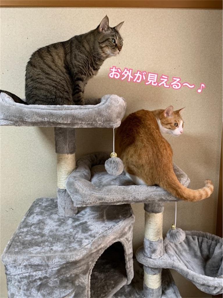 f:id:mitsu5858:20200726091900j:image