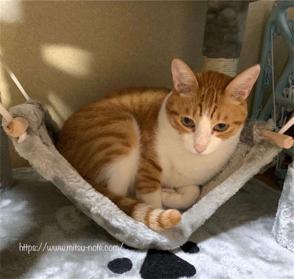 キャットタワーのハンモックに入る猫