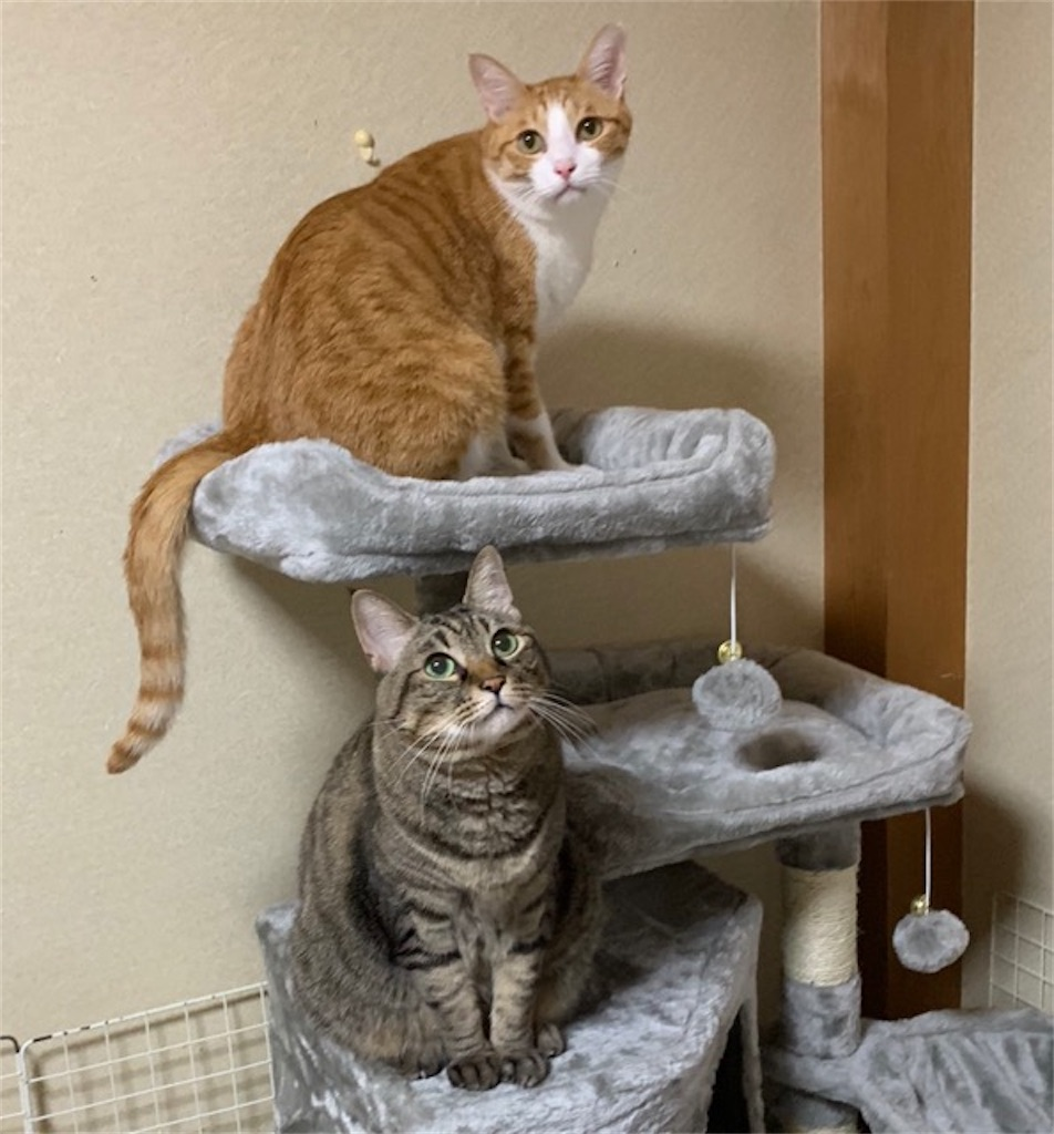 猫はハンモックに乗らないと思っていたら実は好きだった!?