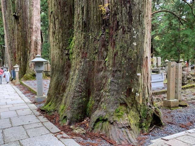 高野山奥の院の隠れたパワースポットの御神木