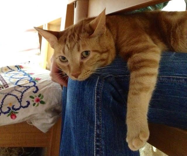 猫に膝の上に乗って欲しいなら冬がチャンス!?対策と気長に待つこと