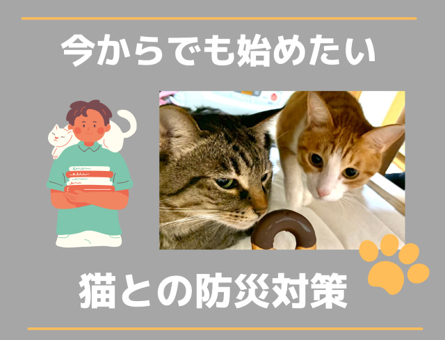 今からでも始めたい【猫との防災対策】イメージして備えること