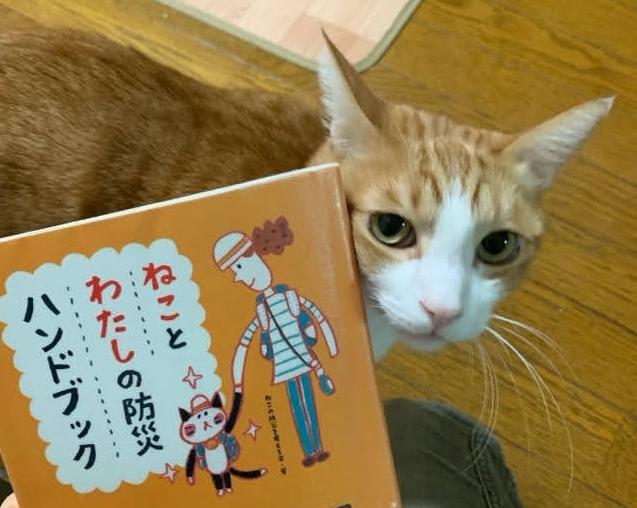 今からでも始めたい【猫との防災対策】イメージして備えることが大事