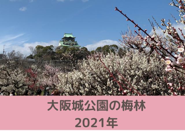 大阪城公園の梅林【2021年】メジロいっぱい!アクセスと開花状況
