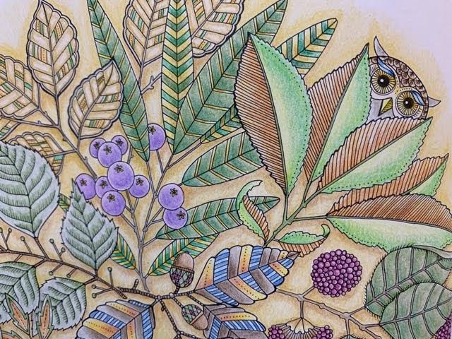 フクロウと植物の塗り絵「ひみつの花園」
