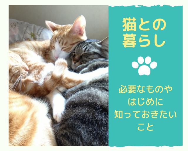 猫との暮らしに必要な物は?はじめに知っておきたいことのまとめ
