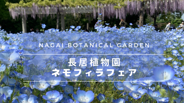 長居植物園の【ネモフィラフェア】フジの花も楽しめるおすすめ観光スポット
