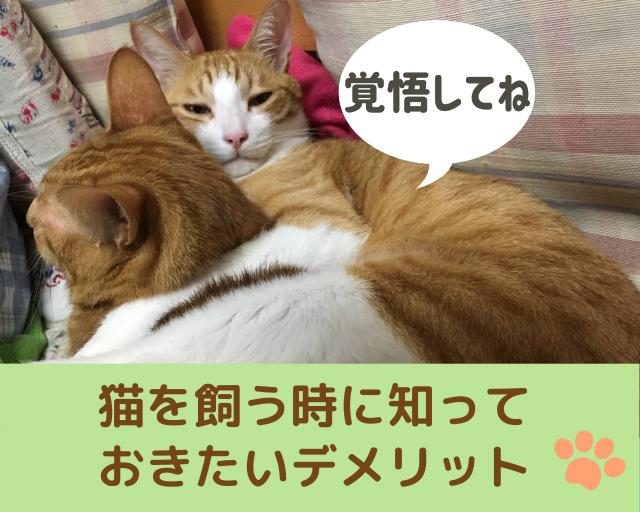 猫と暮らすには覚悟が必要!デメリットを知っておこう
