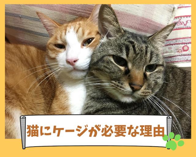 猫を飼うのに【ケージが必要な理由】メリットと活用法!安心できる場所に