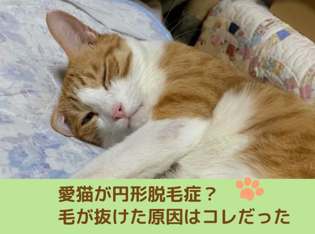 【10才の愛猫が円形脱毛症?】毛が抜けた原因はストレスだった