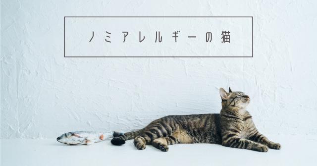 猫のえづく咳が心配!原因はノミアレルギーだった【検査内容と治療法】