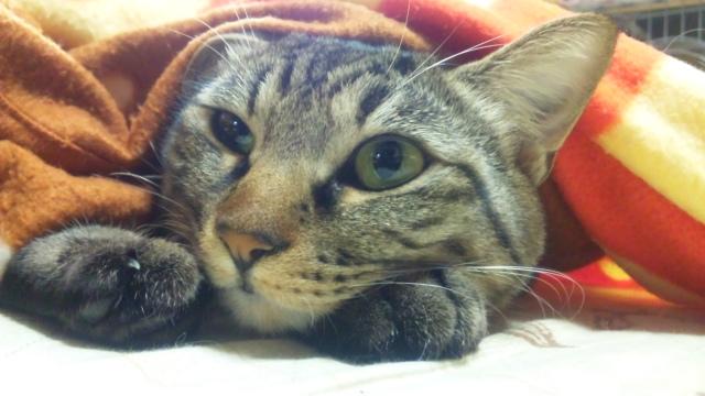 野良猫だから外でも生きやすいわけじゃない!飼うなら室内飼いが基本