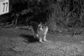定山渓のネコ