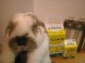 20100213_うさぎとレモン牛乳