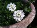 20100430_実家の庭