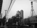 20101111_大通東