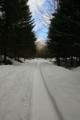 支笏湖畔の林道