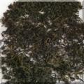 緑茶とゆーより烏龍茶?