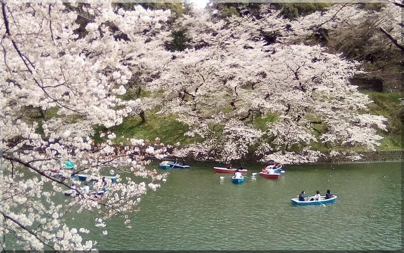 f:id:mitsuba64:20190406121523j:image