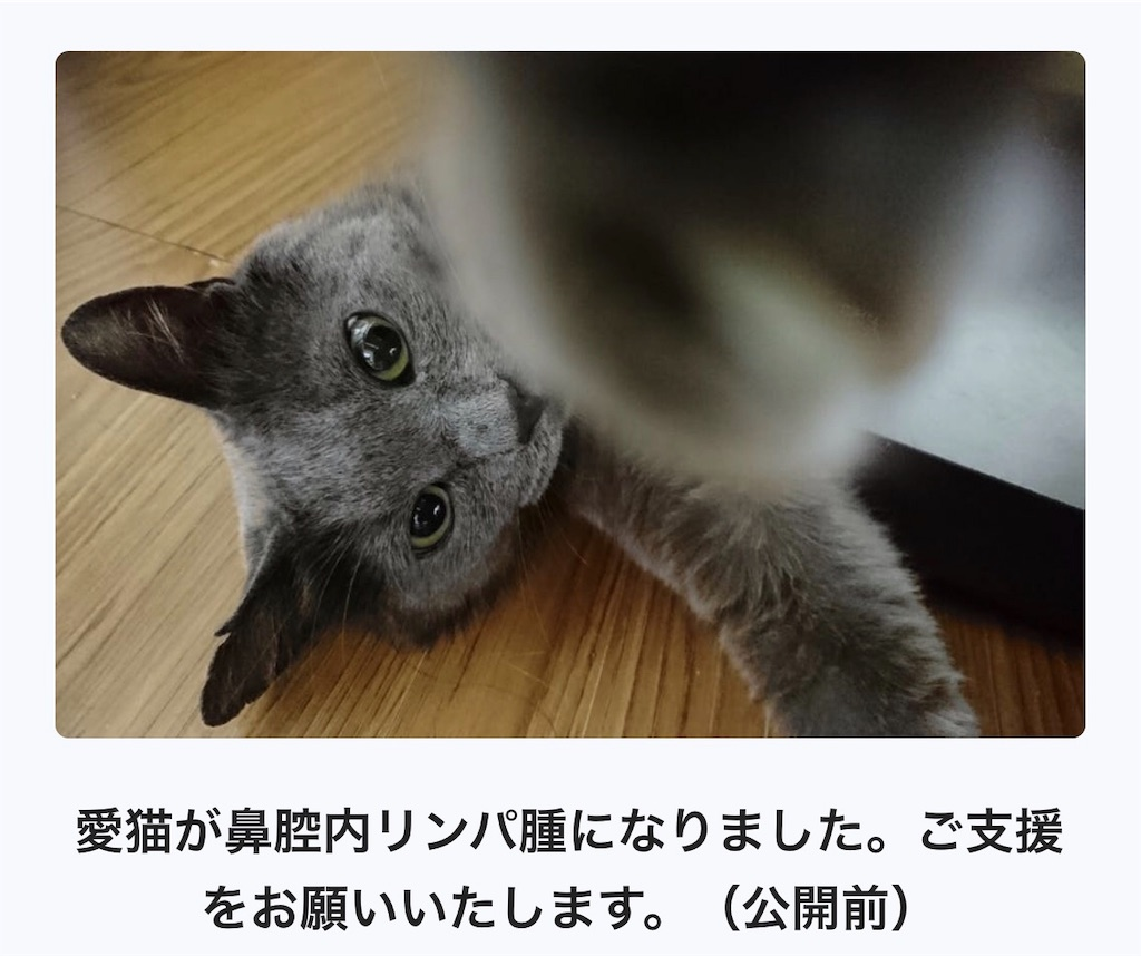 f:id:mitsue-m:20190421141930j:image