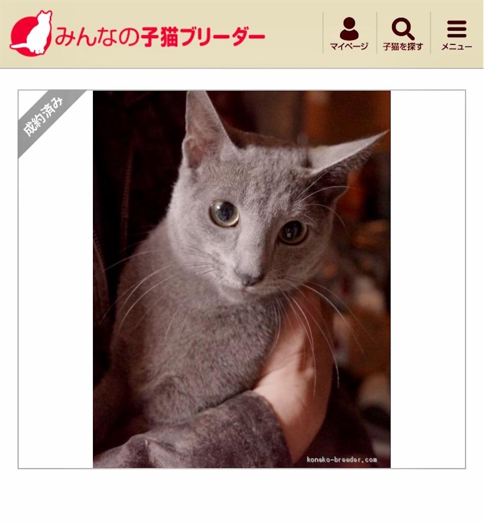 f:id:mitsue-m:20200301125341j:image
