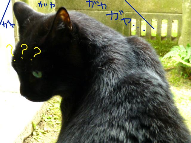 f:id:mitsuko26:20141021102127j:plain