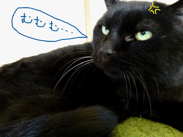 f:id:mitsuko26:20141030104130j:plain