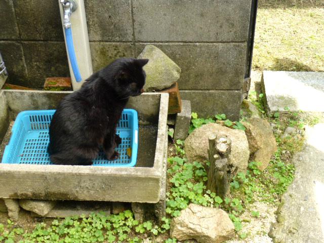 f:id:mitsuko26:20150607100231j:plain