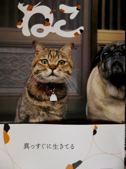 f:id:mitsuko26:20170129104048j:plain