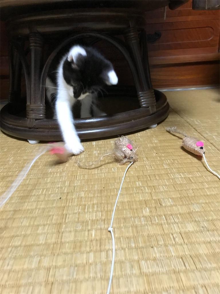 f:id:mitsuko510:20210925200939j:image
