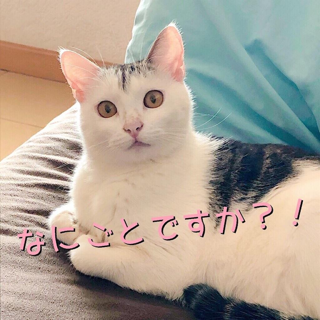 f:id:mitsume_tobesimple:20190726183924j:image