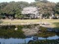 水面下の桜