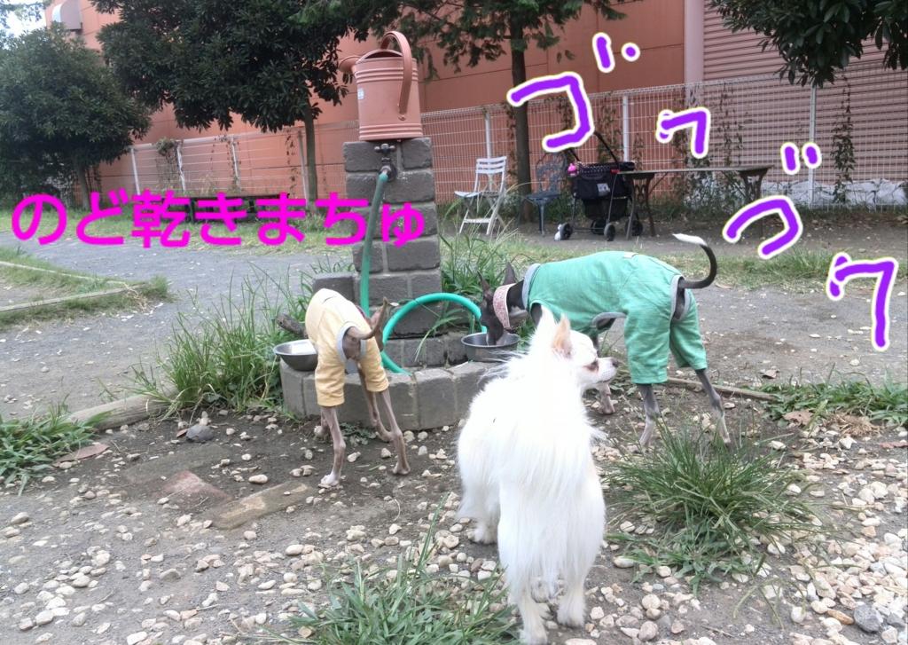 f:id:mivamaro:20160814153216j:plain
