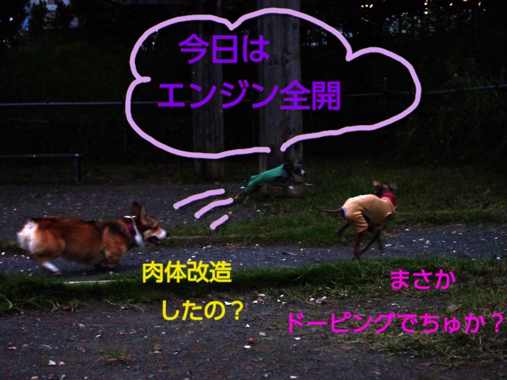 f:id:mivamaro:20160927205809j:plain