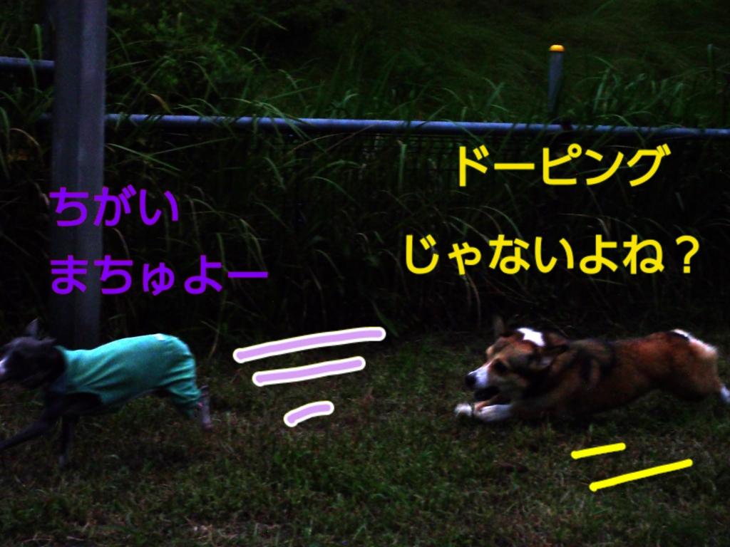 f:id:mivamaro:20160927210133j:plain