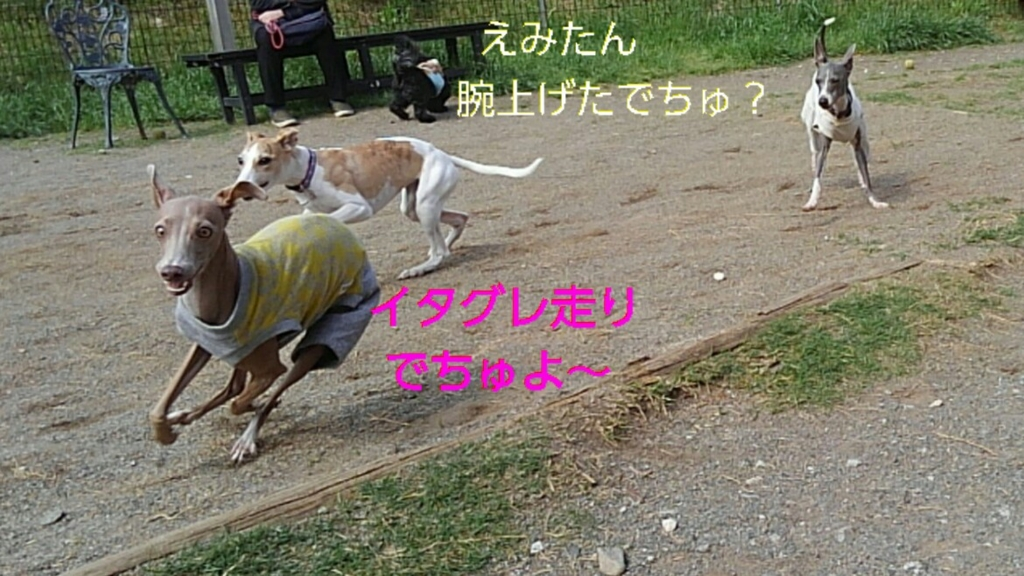 f:id:mivamaro:20170424164938j:plain