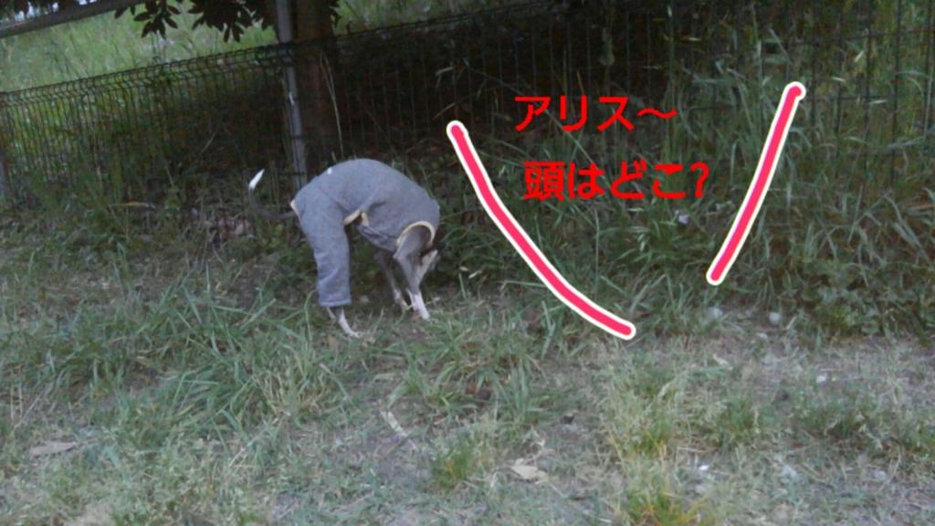 f:id:mivamaro:20170509220025j:plain