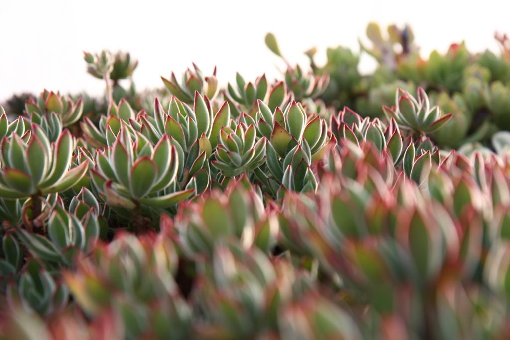 f:id:miwa-planted:20170129153557j:plain