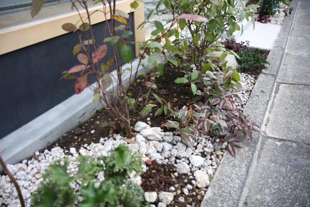 f:id:miwa-planted:20170219160234j:plain