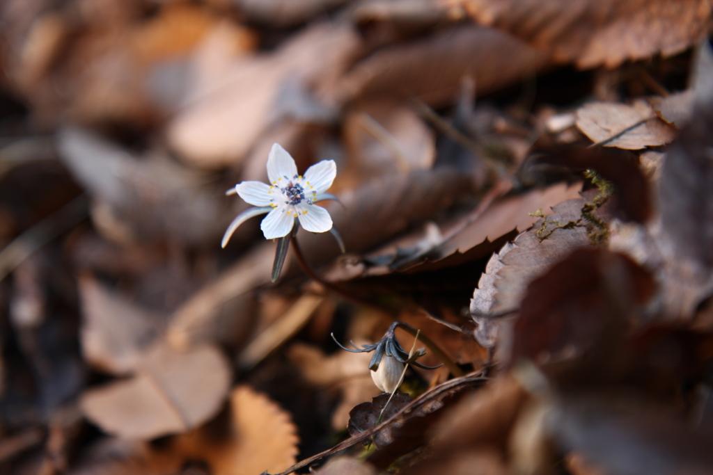f:id:miwa-planted:20170219175439j:plain