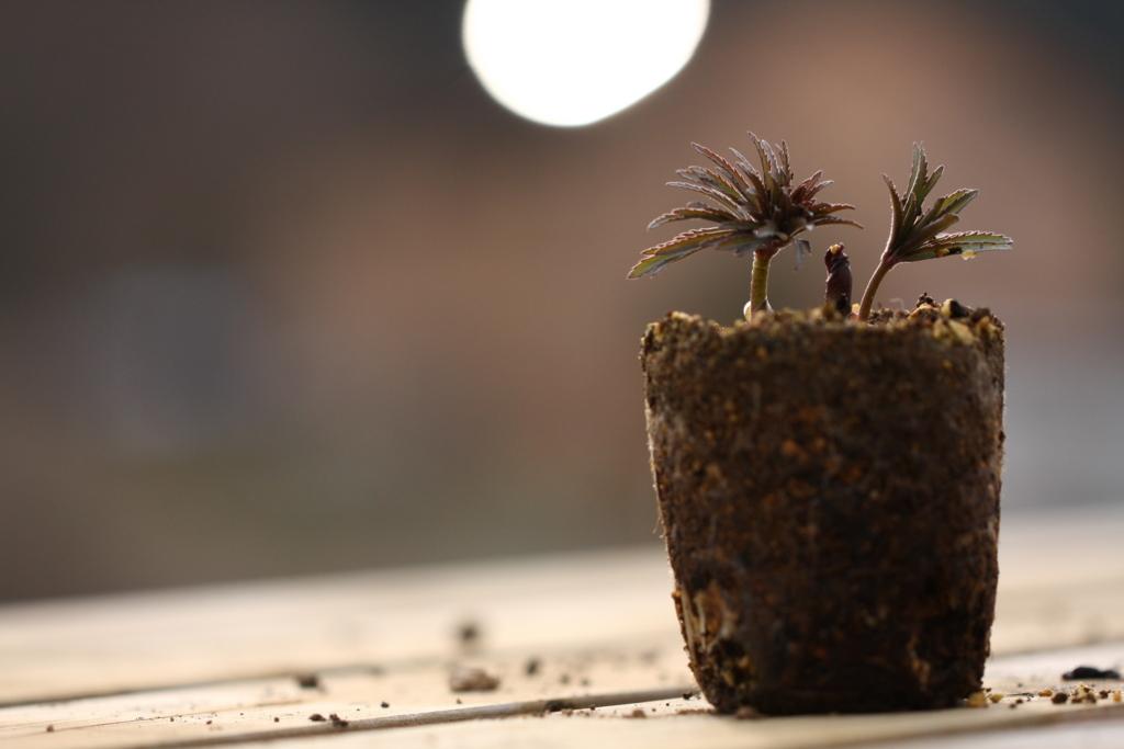 f:id:miwa-planted:20170405215232j:plain