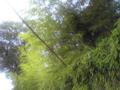 [桂] 桂離宮 外壁の笹・竹