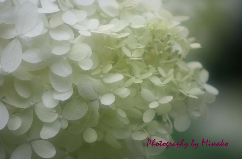 f:id:miwako-amano:20160725010837j:plain