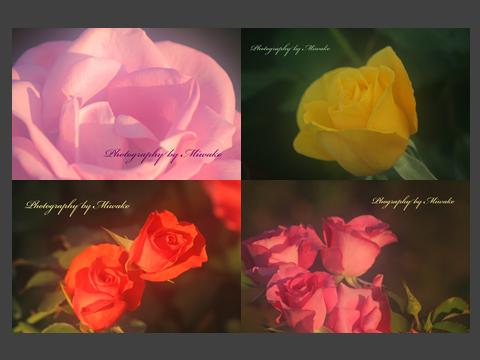 f:id:miwako-amano:20161016202220p:plain