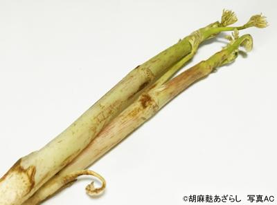 f:id:miwamomoka:20180331084551j:plain