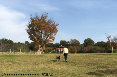 f:id:miwamomoka:20190625122547j:plain