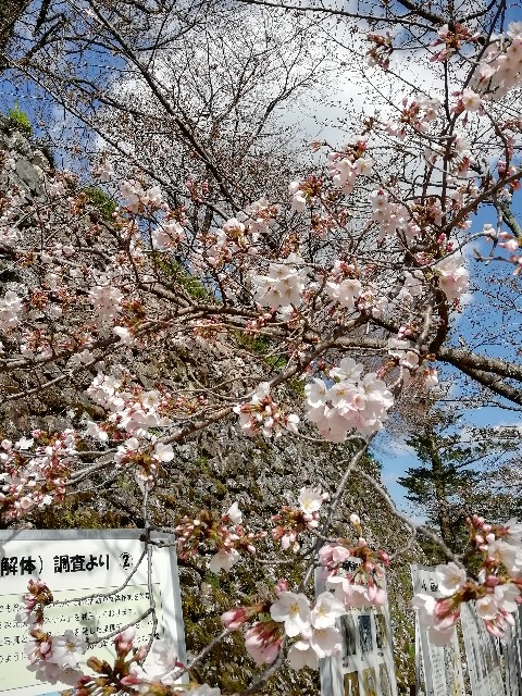 f:id:miwanotabi:20190326231007j:plain