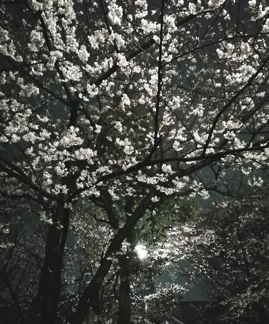 f:id:miwanotabi:20190401091309j:plain