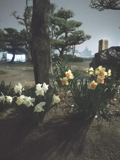 f:id:miwanotabi:20190401092734j:plain
